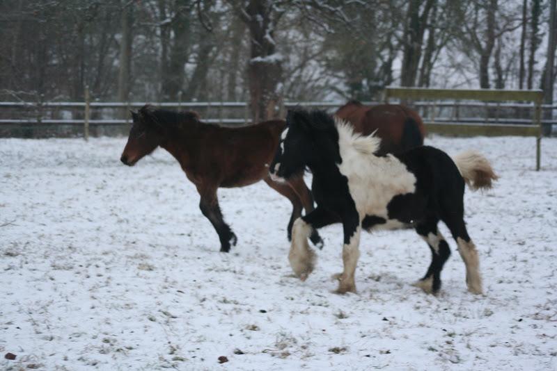 Le  calvados sous la neige... les chevaux s'éclatent! IMG_4955