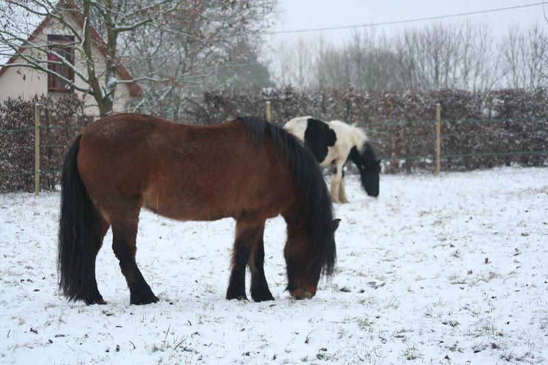 Le  calvados sous la neige... les chevaux s'éclatent! IMG_4940
