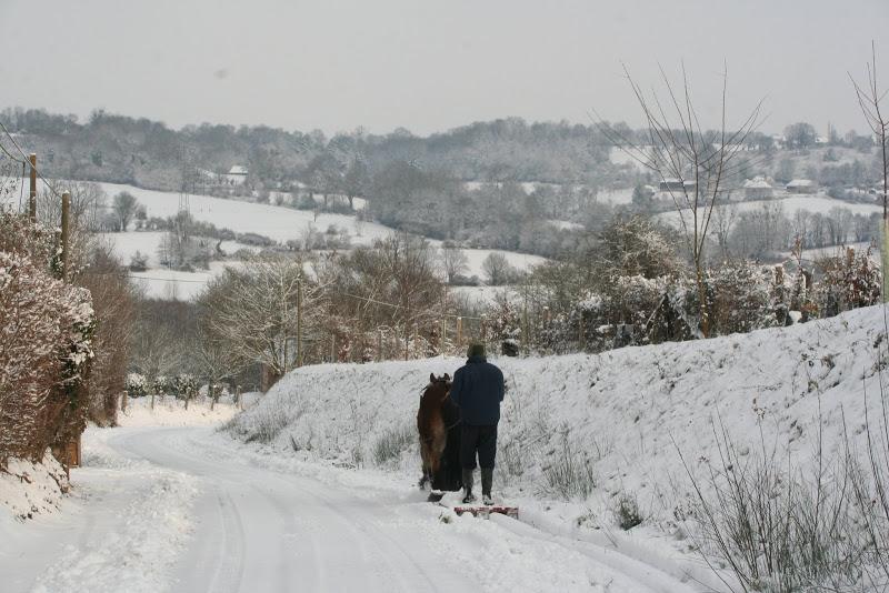 Le  calvados sous la neige... les chevaux s'éclatent! IMG_5143