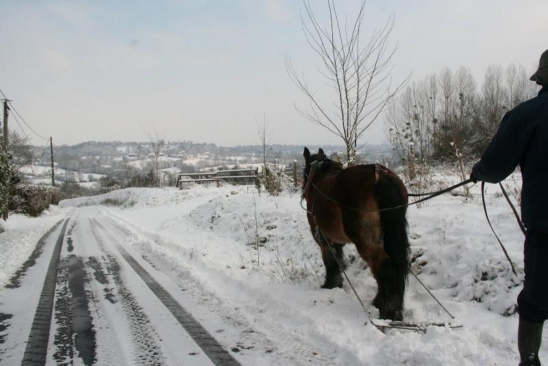 Le  calvados sous la neige... les chevaux s'éclatent! IMG_5123