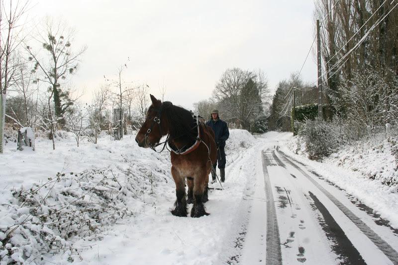 Le  calvados sous la neige... les chevaux s'éclatent! IMG_5118