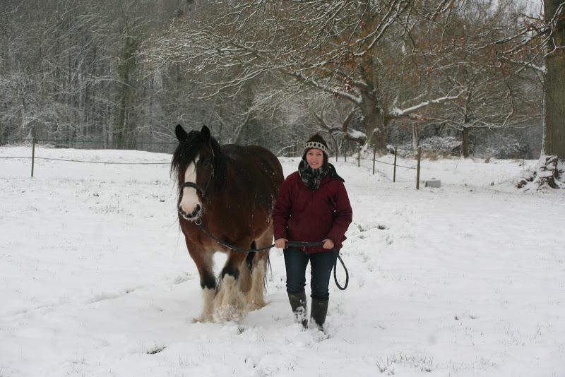 Le  calvados sous la neige... les chevaux s'éclatent! IMG_5096