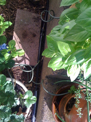 automatic watering Photo%202-769866