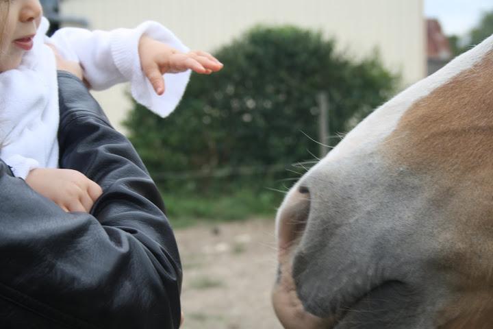 Thème de décembre : les chevaux et les enfants IMG_4820
