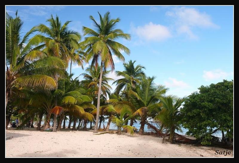Les Belles Plages de Guadeloupe (LUMIX FZ50) Guadeloupe%202008%20-%20277
