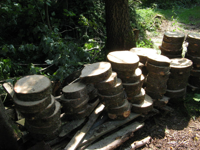 aménagement du boisé arrière Visite%20de%20Gama%20012