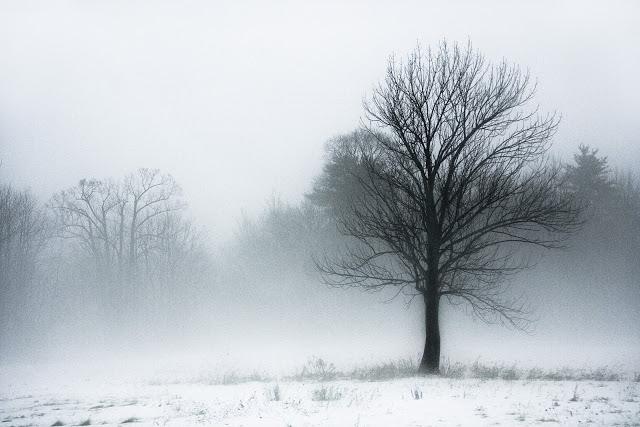 Kroz maglu...  Tree_Fog
