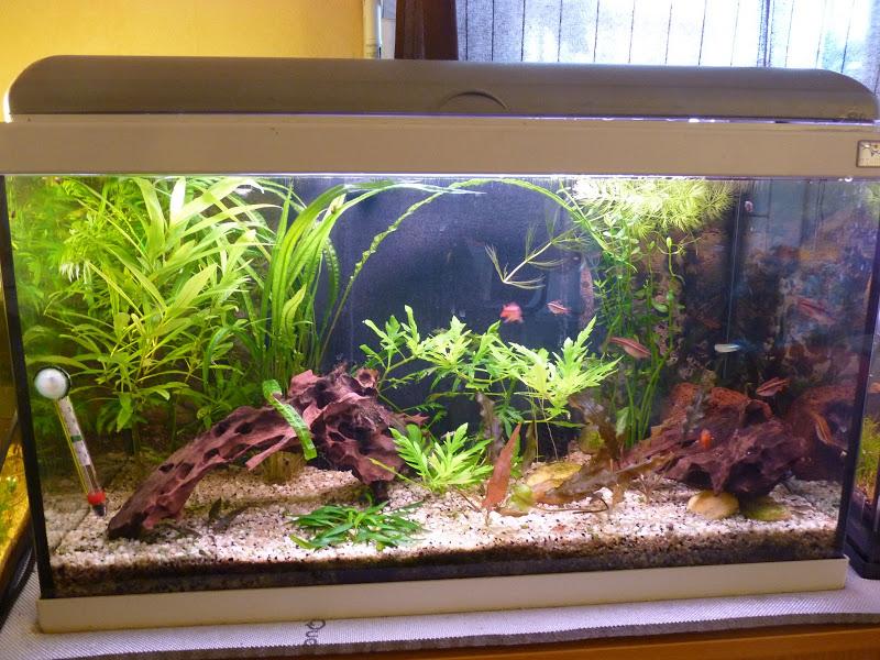 Ma petit histoire Aquariophile de 2009 à aujourd'hui  P1010394