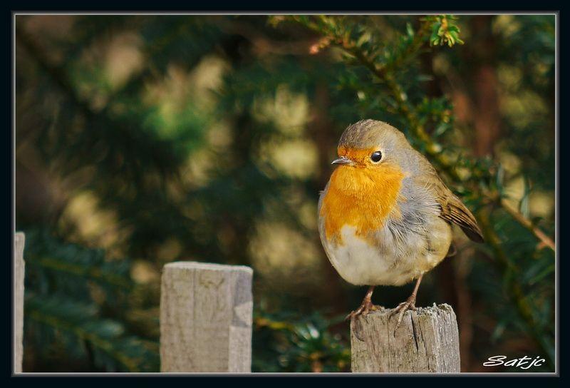 VOTEZ-Votre plus belle photo au salon de la Photo - PHASE 01 Oiseaux002