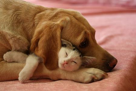 ПРИЈАТЕЛИ Funny-cat-and-dog-photos30