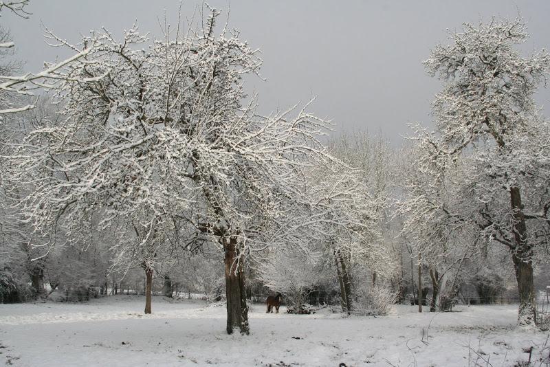 Le  calvados sous la neige... les chevaux s'éclatent! IMG_5543