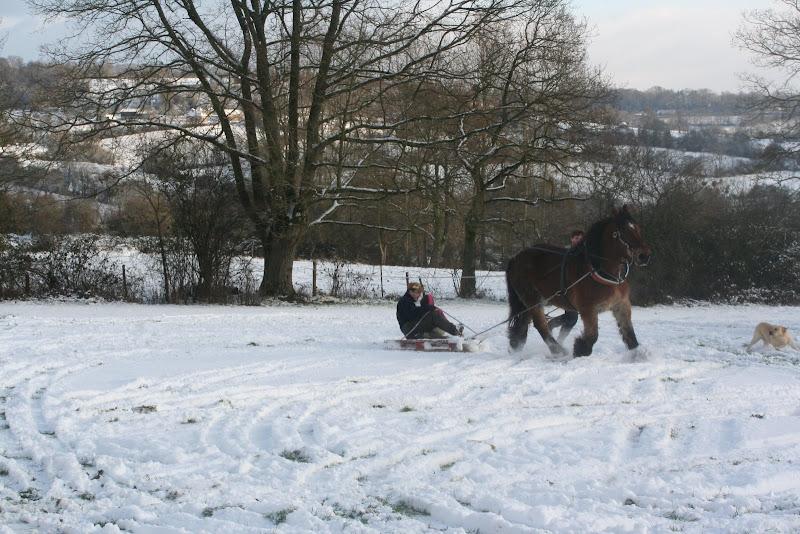 Le  calvados sous la neige... les chevaux s'éclatent! IMG_5260