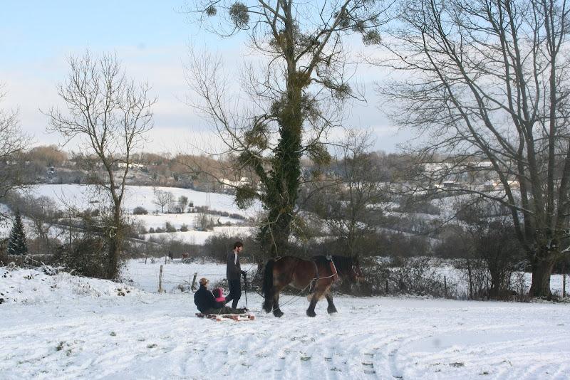 Le  calvados sous la neige... les chevaux s'éclatent! IMG_5252