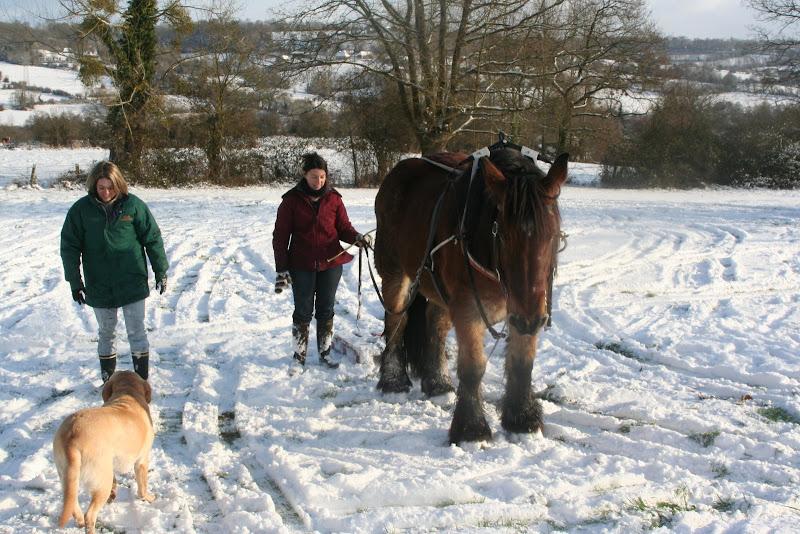 Le  calvados sous la neige... les chevaux s'éclatent! IMG_5231