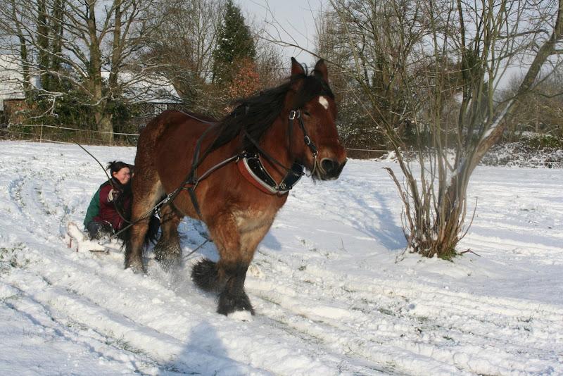 Le  calvados sous la neige... les chevaux s'éclatent! IMG_5227