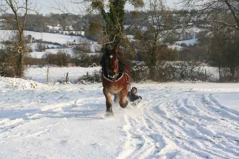 Le  calvados sous la neige... les chevaux s'éclatent! IMG_5214