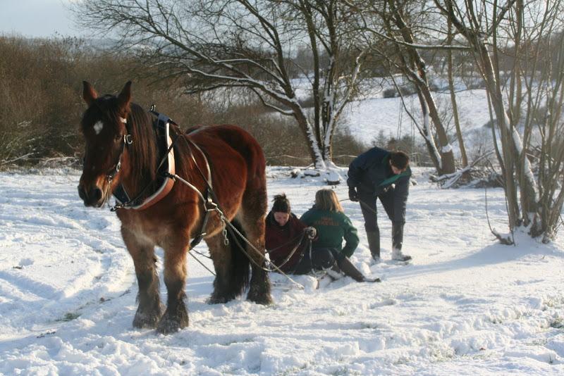 Le  calvados sous la neige... les chevaux s'éclatent! IMG_5217