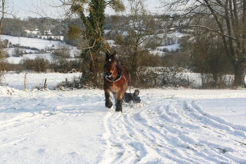 Le  calvados sous la neige... les chevaux s'éclatent! IMG_5213