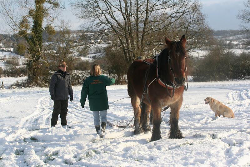 Le  calvados sous la neige... les chevaux s'éclatent! IMG_5198