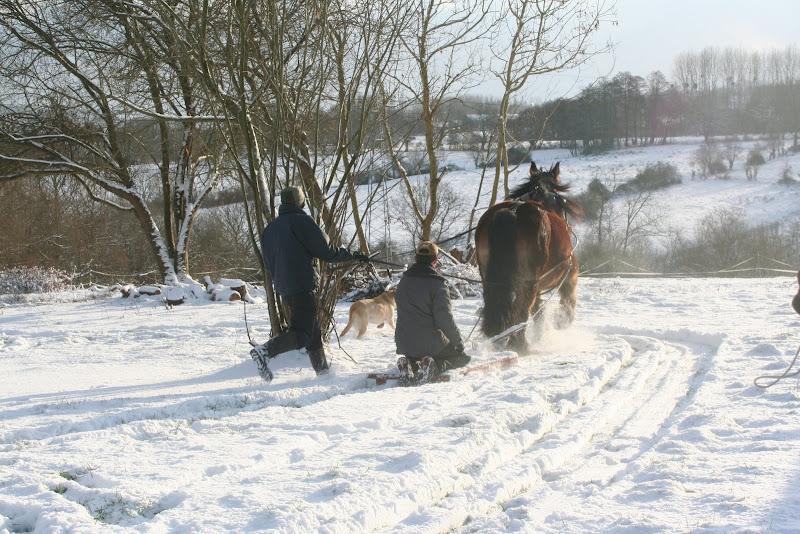Le  calvados sous la neige... les chevaux s'éclatent! IMG_5184