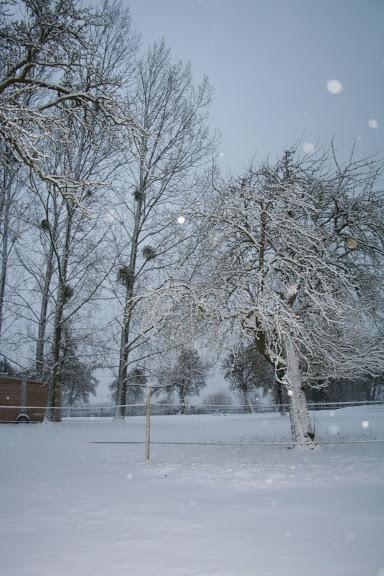 Le  calvados sous la neige... les chevaux s'éclatent! IMG_5047