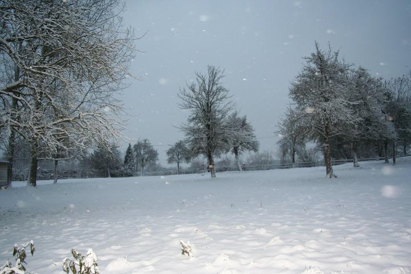 Le  calvados sous la neige... les chevaux s'éclatent! IMG_5052