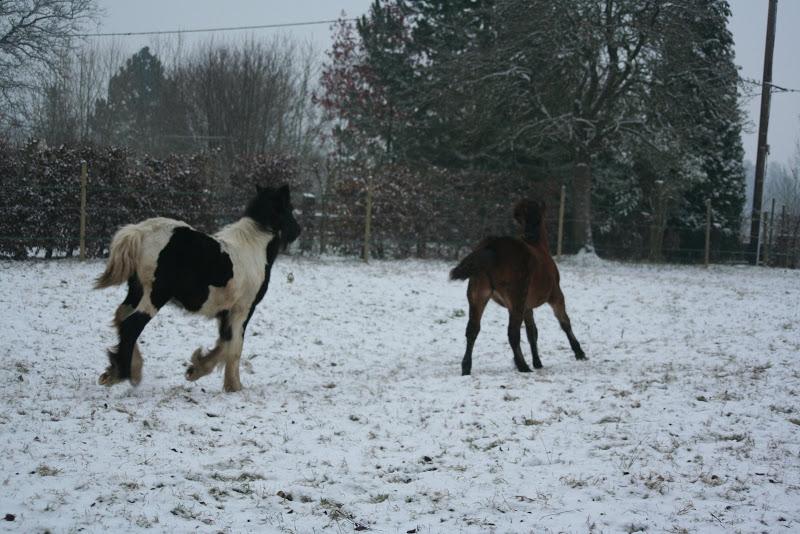 Le  calvados sous la neige... les chevaux s'éclatent! IMG_4970