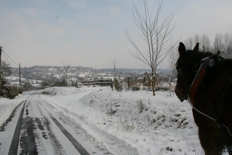 Le  calvados sous la neige... les chevaux s'éclatent! IMG_5120