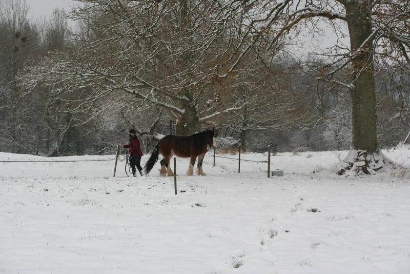 Le  calvados sous la neige... les chevaux s'éclatent! IMG_5086