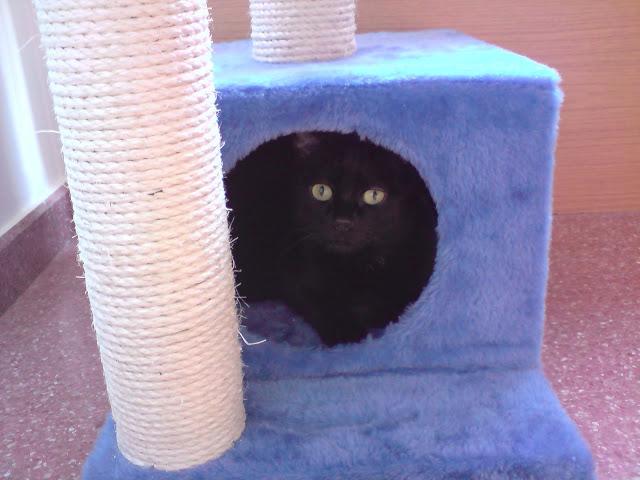 ¡¡¡Pepita ya está en casaaaaaaaaaaaaa!!!! :D P240410_18.31