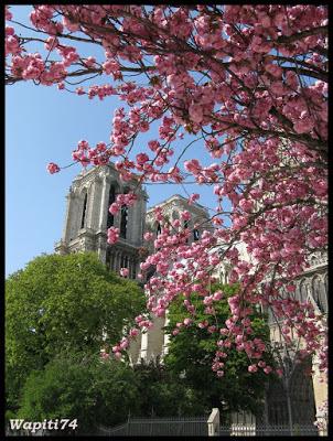 Une semaine printannière à Paris 42.Notre-Dame
