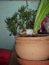 Champignons domestiques PC182219