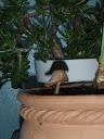 Champignons domestiques PC182221