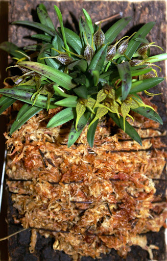 Petites folies d'Orchidays PICT1163