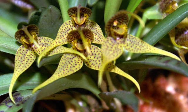 Petites folies d'Orchidays PICT1165