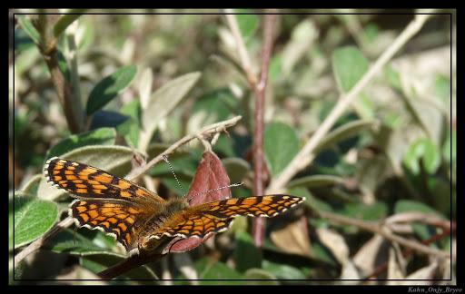VOTEZ- Votre plus belle photo au salon de la Photo - PHASE 2 Papillon