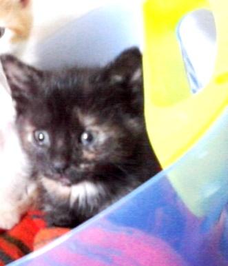 Mačka stara 4 mesece išče dom P21-05-10_12-24%5B2%5D