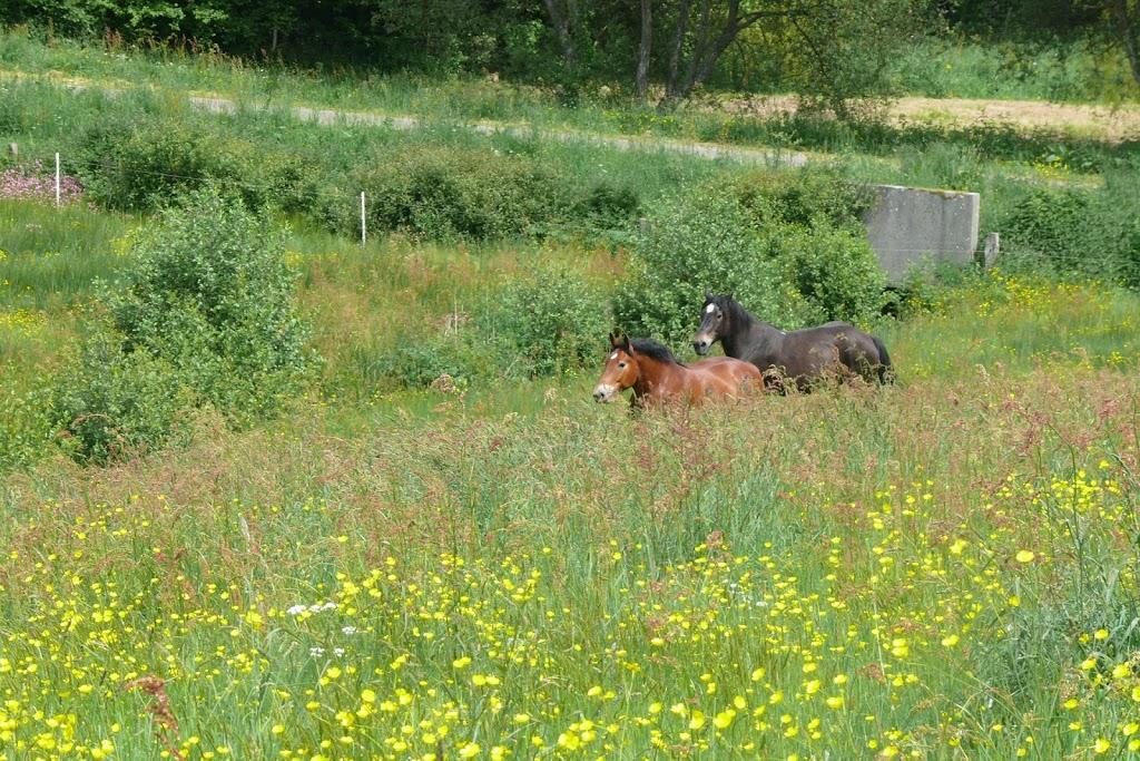 """THEME D 'AOUT 2012 ...""""des chevaux et des fleurs """" IMAGE_5C6EC9EE-5044-48A7-91F5-EC32D5CB1C88"""
