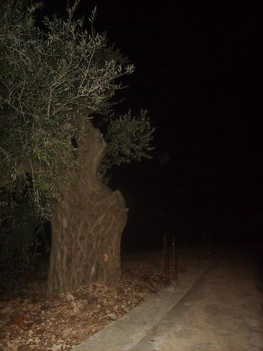 صور خاصة لمنتدى فقوعة في الطريق الى مدينة جنين S5000195