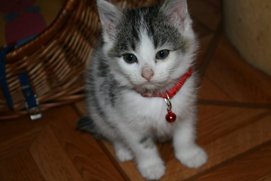 ZELIE & CLEMENTINE, chatonnes de 6 semaines à Lesquin (59) IMG_5029