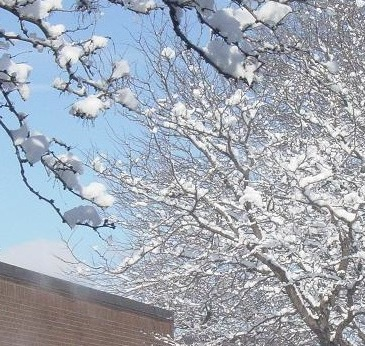 Fun'n'Seasonal MISCfunSeason19_seasonal9