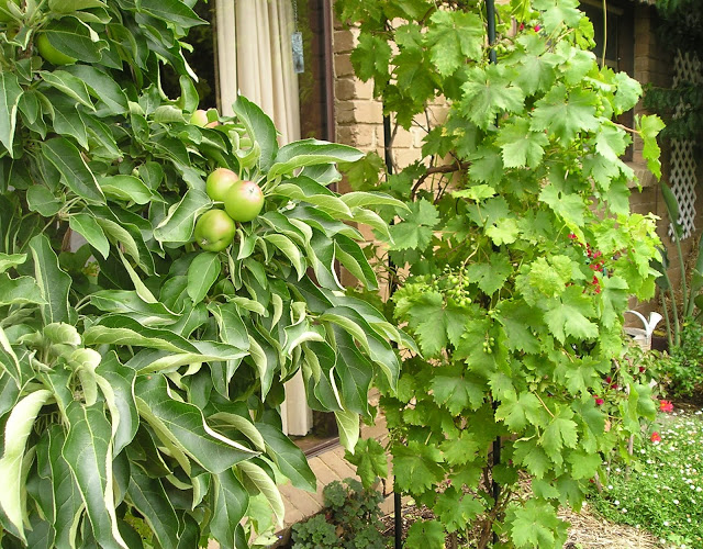 Our productive garden U3A%20AGM%20007