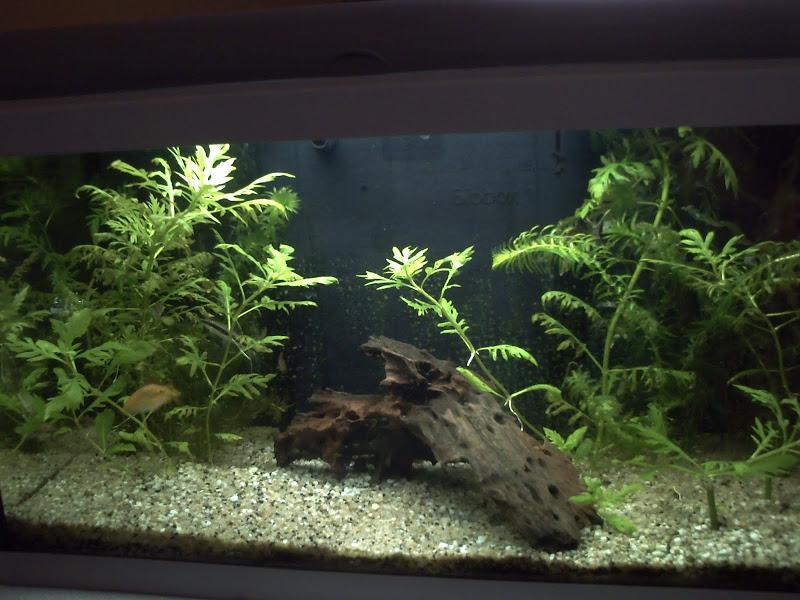 Ma petit histoire Aquariophile de 2009 à aujourd'hui  Debut
