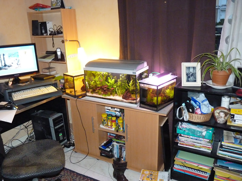 Ma petit histoire Aquariophile de 2009 à aujourd'hui  P1000210