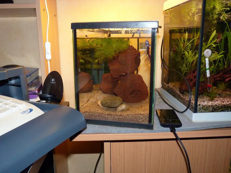 Ma petit histoire Aquariophile de 2009 à aujourd'hui  P1000207
