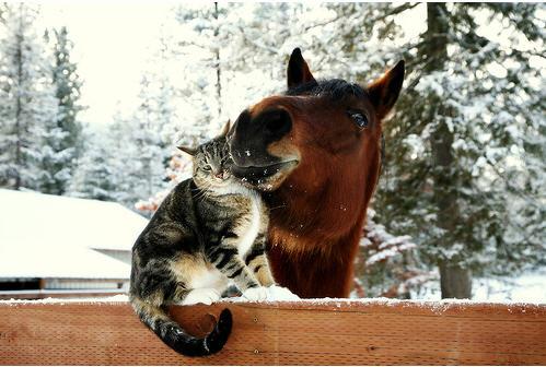 FELIZ DIA DEL AMIGO!!!!!! Cat-horse-3