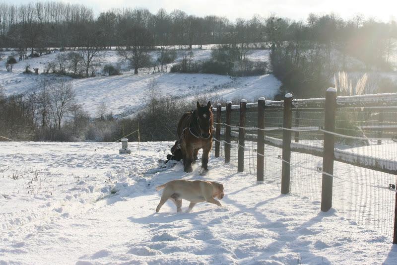 Le  calvados sous la neige... les chevaux s'éclatent! IMG_5241