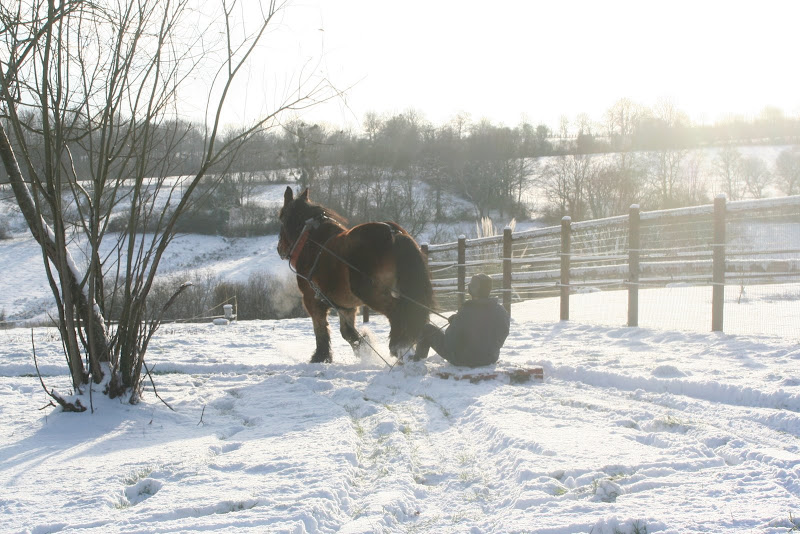 Le  calvados sous la neige... les chevaux s'éclatent! IMG_5207