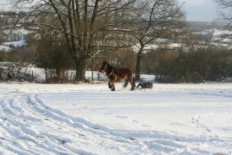 Le  calvados sous la neige... les chevaux s'éclatent! IMG_5211
