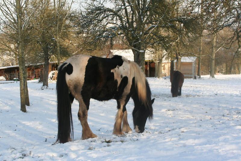 Le  calvados sous la neige... les chevaux s'éclatent! IMG_5178